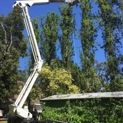 EWP-Poplars-1-