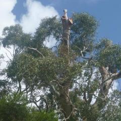 Veteran-tree-management-